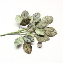 Vintage Shaded Green Velvet Rose Leaves